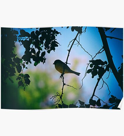 Small bird in a tree Poster