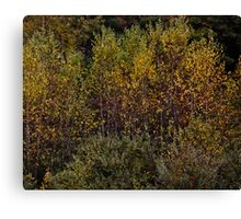 Abstract In Nature Canvas Print