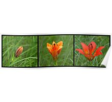 Wood Lilly Life Poster