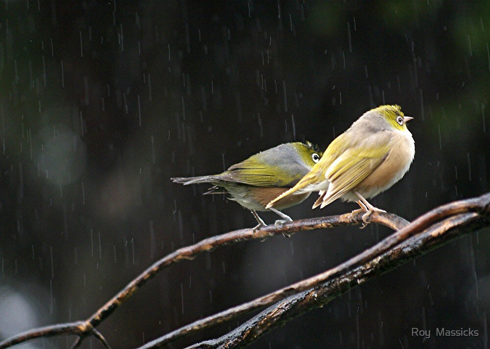 And the rains came down........! by Roy  Massicks