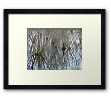 Pond Reflections Framed Print