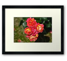 Thing of beauty  Framed Print