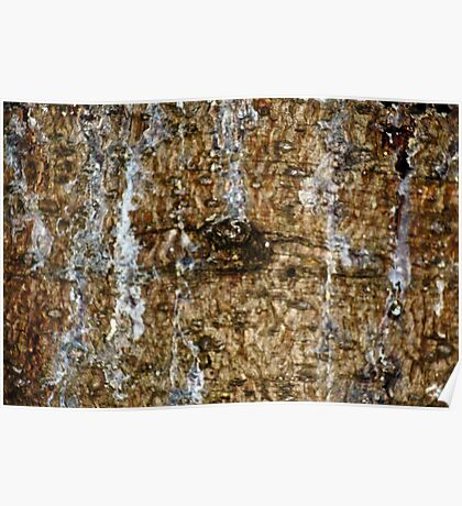 Wood Bark and Sap Stains Poster