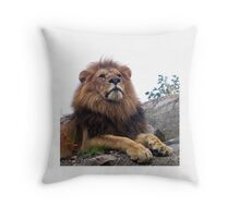 Young Lion male - photo gifts and apparel for big cat lovers - unique photo gifts from mmersdesign Throw Pillow