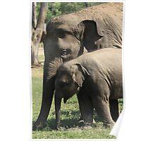 Elephant Love 2 Poster