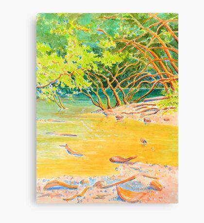Creek Mouth, Port Douglas Canvas Print