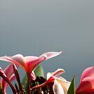 Plume Bloom by Donna Adamski