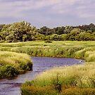 Splendor In The Grass by jules572