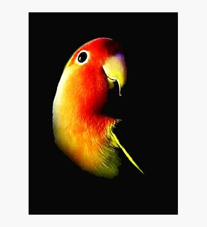 angry bird Photographic Print