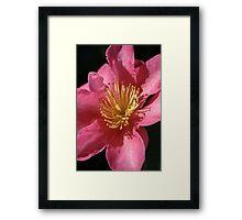 Original Beauty of Camellia Framed Print
