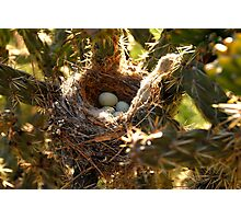 """""""Thorny Nest"""" Photographic Print"""