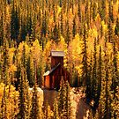 """Mining with Aspens"" by David Lee Thompson"