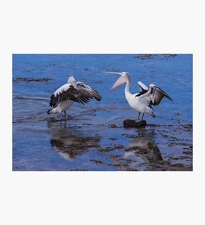Pelican Fight Photographic Print