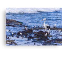 Pelican Boss Canvas Print