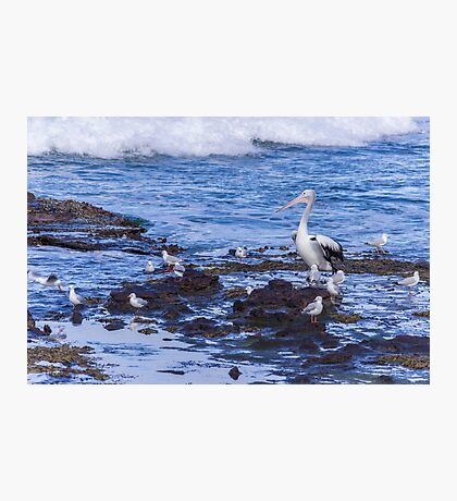 Pelican Boss Photographic Print