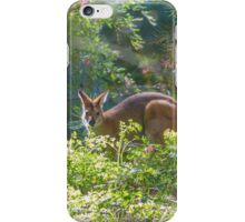 Wallaby In Bushes iPhone Case/Skin