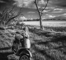 Dead tree and a Vespa by mrjaws