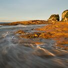 Gold Rush at Crowdy Bay by Barbara Burkhardt