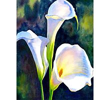 """""""CALLA LILLIE"""" Floral Painting Print Photographic Print"""