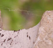 Spider Threads Sticker