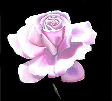 English Rose by Gallopingcarrot