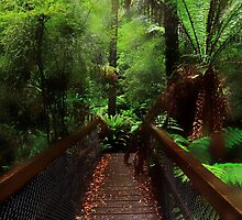 The Brigde to the Paradise by Angelika  Vogel