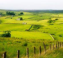 The Green Green Fields by maureen bracewell