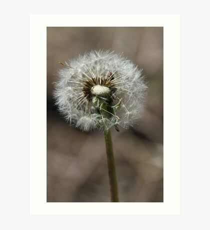 Wished on dandelion - 2016 Art Print