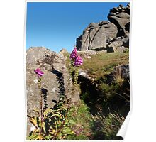 Two Foxgloves at Houndtor Poster