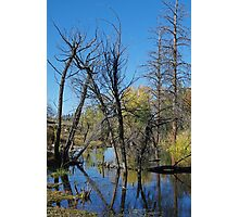 At the Beaver Pond Photographic Print