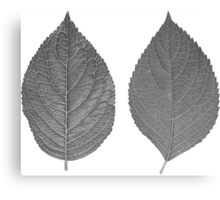 Gray Leaves Canvas Print