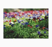 A field of cultivated colourful and vivid Anemone flowers. Photographed in Israel Kids Tee