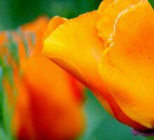 Loving The Color Orange Sticker