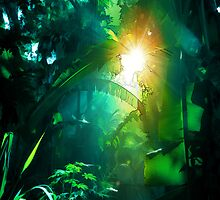 Jungle by rcurtiss000