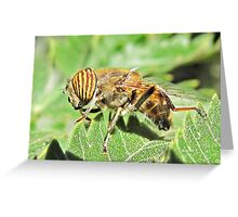 Bee mimic does yoga Greeting Card