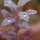 raindrop crystals by Melani