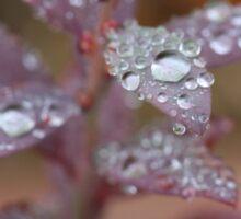 raindrop crystals Sticker
