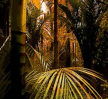 Tropical Fronds by rcurtiss000
