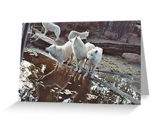 Listening Wolves Greeting Card