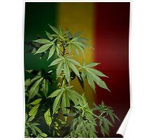 Marijuana on rastafarian flag Poster