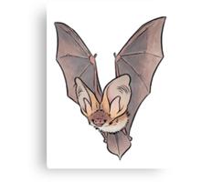 Grey long-eared bat Canvas Print