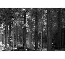 scattered light Photographic Print