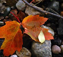 Autumn  by Janet Gosselin