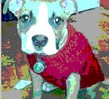 Topopo puppy in her red sweater by Topopo