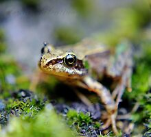The baby frog. by AderynValentine