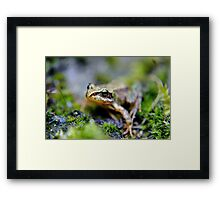 The baby frog. Framed Print