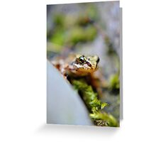 The little watcher. Greeting Card
