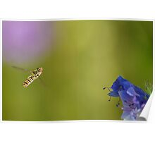 Hovering Hoverfly Poster