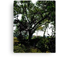 Stanely Park's Tree Canvas Print