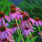 Coneflowers in the Moonlight by Eileen McVey